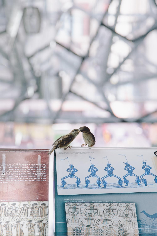 melbourne, street photography, australia, sparrows