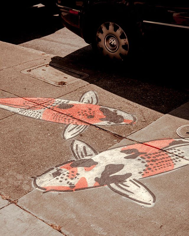 Koi on Concrete, San Fran 2018 🇺🇸 colour palettes, street art and equality-soled shoes from suburban wanderings. I used to really dislike shooting in high noon - the shadows were harsh, the light bleached and blown out, but I've really come to enjoy it in the right conditions. Distant project goals: suburbia street style shoot 🤔✨ • • • • • #sanfrancisco #sf #bayarea #alwayssf #igerssf #nowrongwaysf #streetsofsf #mysanfrancisco #wildbayarea #onlyinsf #howsfseessf #visitsanfran #sanfranciscoworld #girlswhotravel #oakland #sf_insta #sanfran #femmetravel #streetdreamsmag #castro #somewheremagazine #streetclassics #streetleaks #lensonstreets #streetlife_award #streetart #koifish