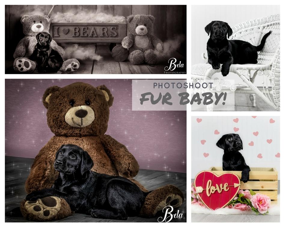 Fur Baby - Photoshoot