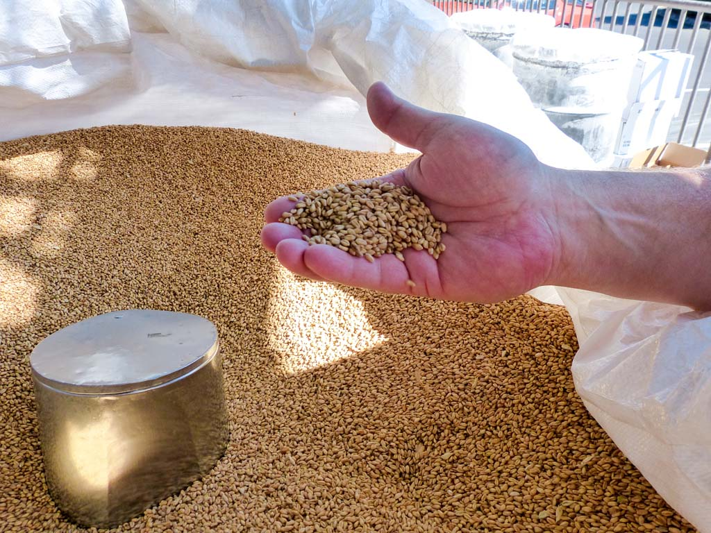 A lovely little grain...