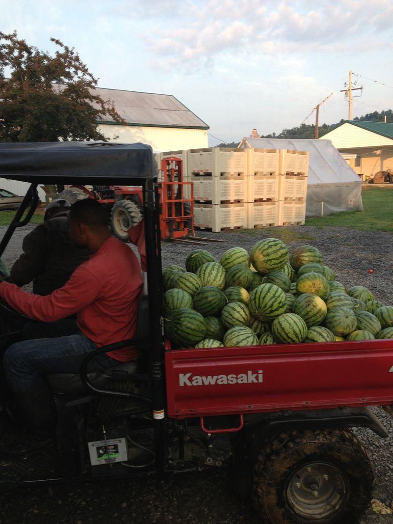 watermelons.jpg