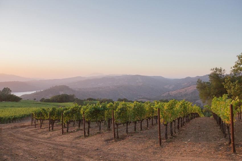 Chappellet Winery Napa Elopement