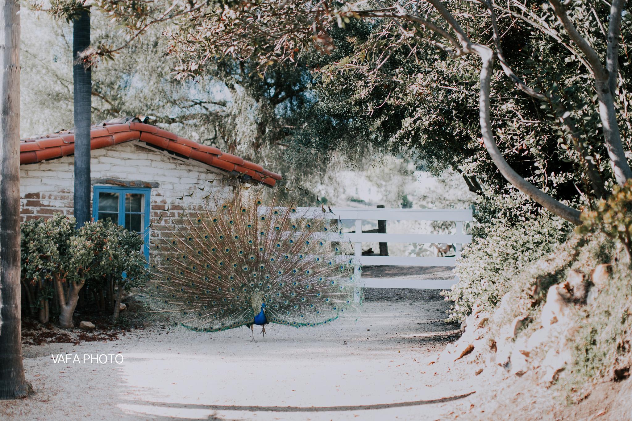 Leo-Carrillo-Ranch-Wedding-Lauren-Mike-Vafa-Photo-516.jpg