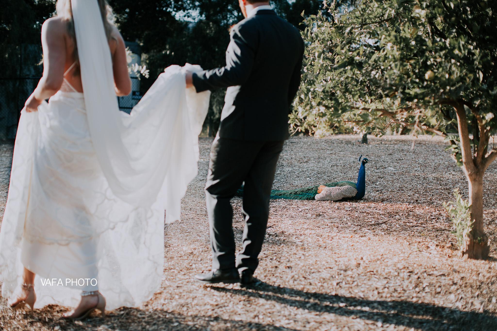 Leo-Carrillo-Ranch-Wedding-Lauren-Mike-Vafa-Photo-705.jpg