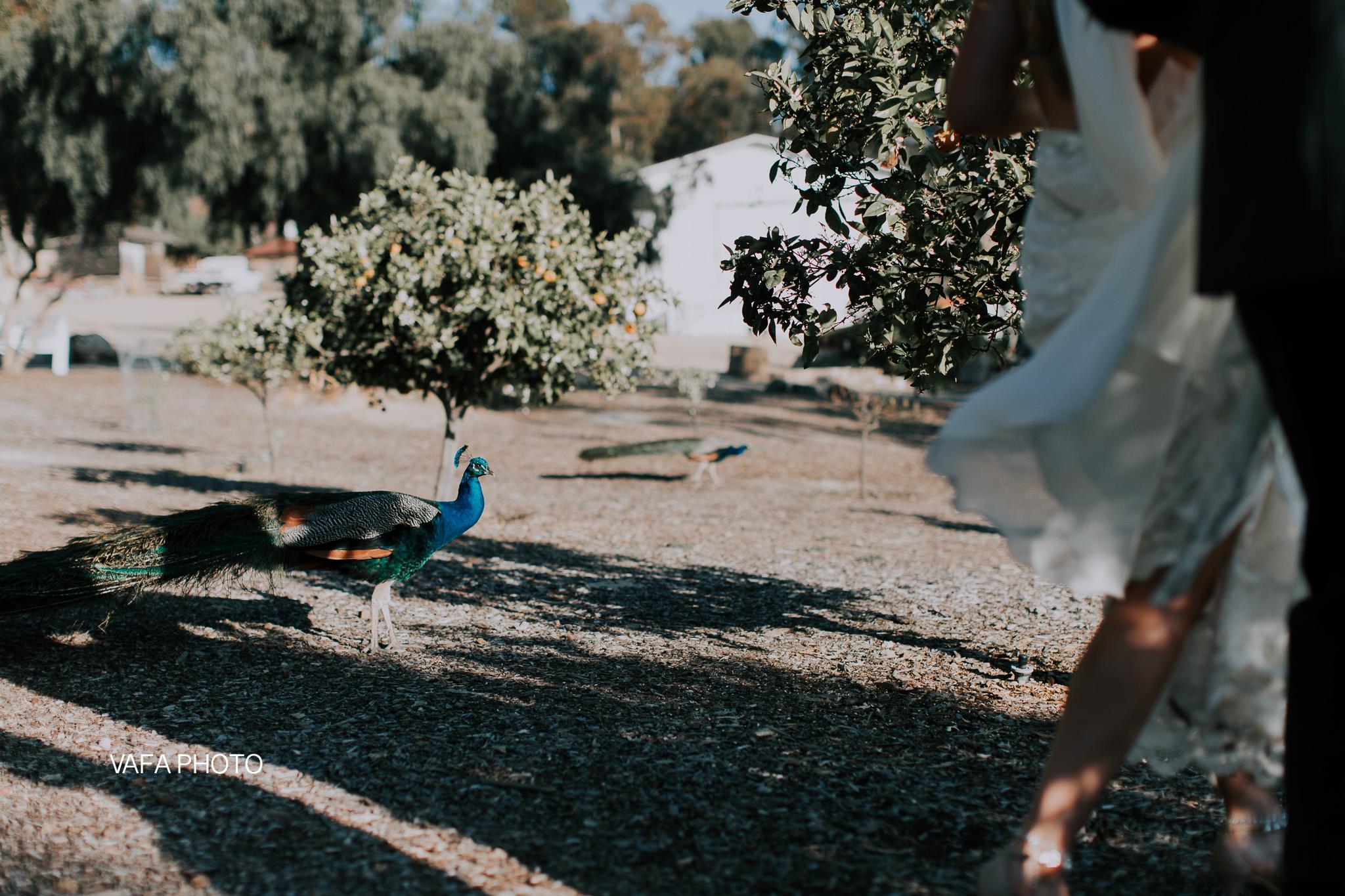 Leo-Carrillo-Ranch-Wedding-Lauren-Mike-Vafa-Photo-713.jpg