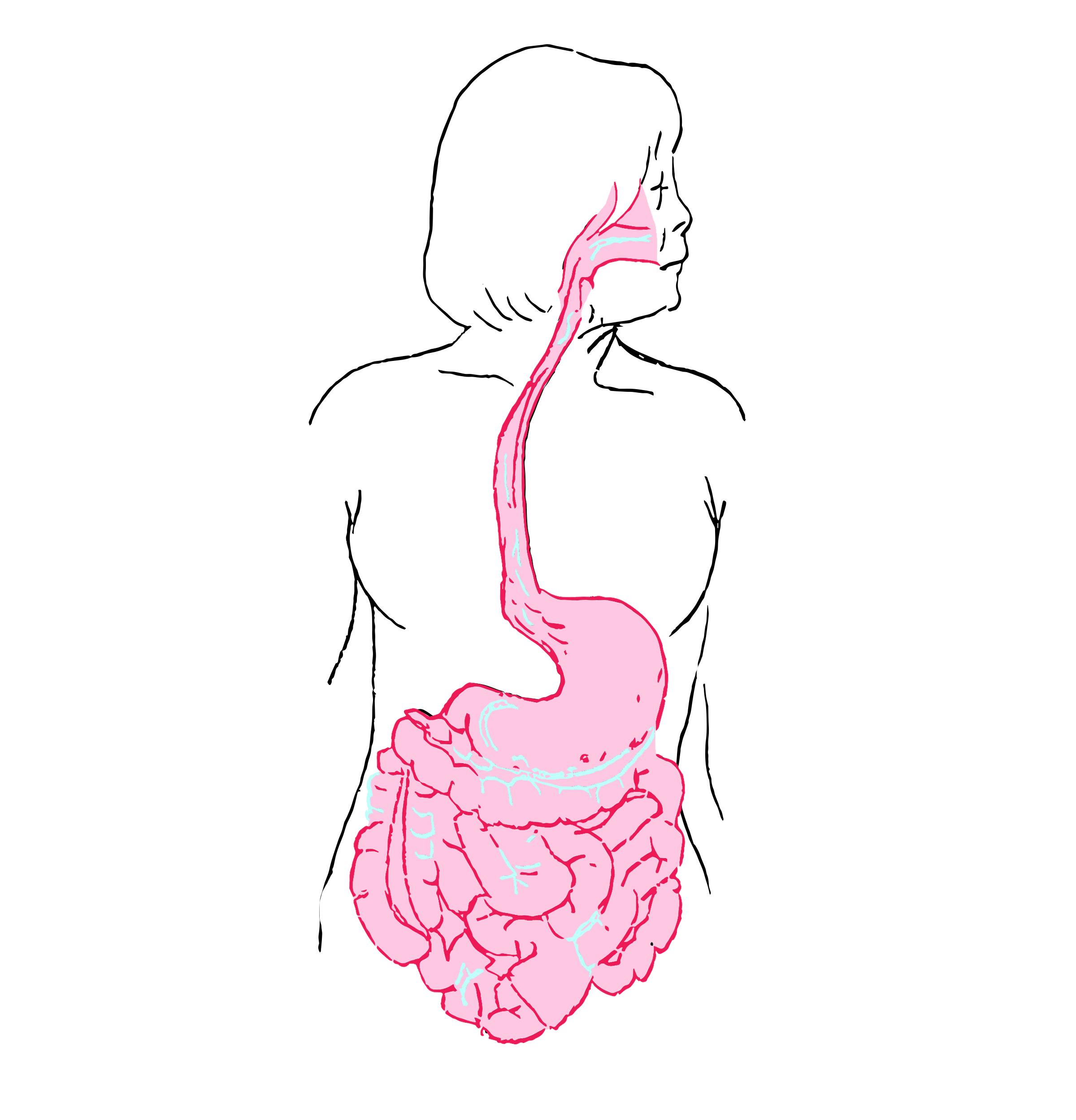 belly2.jpg