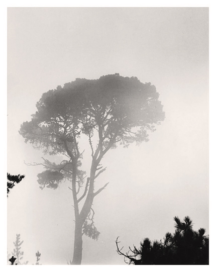 Carmel Valley in Fog