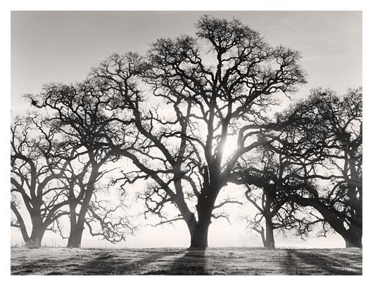 Good Morning, Valley Oaks