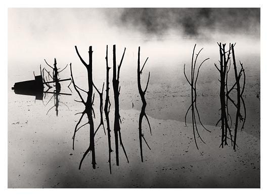 Stark Reflections (Shasta)