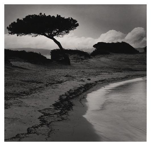 Tree (Greece)