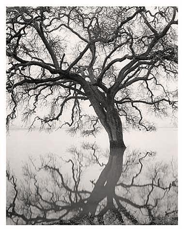 Floating Oak