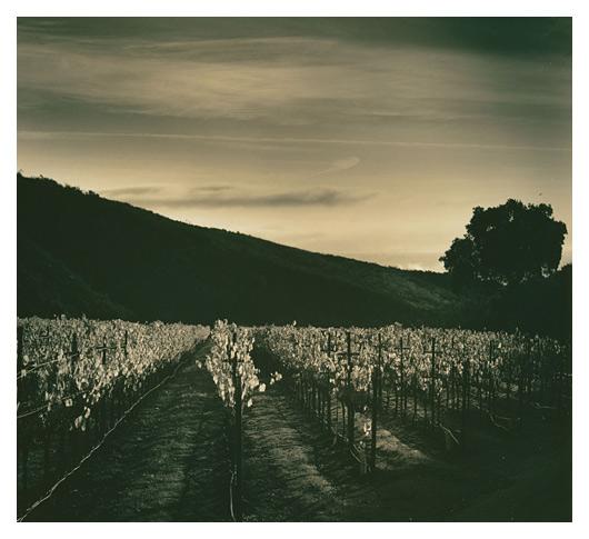 Pinot Noir, Pisoni Vineyard
