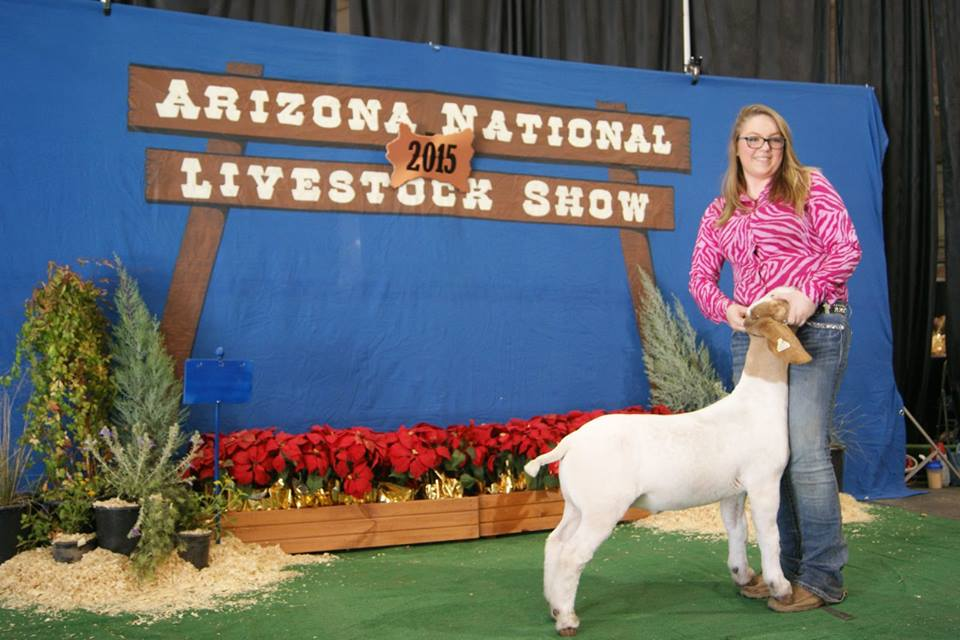 Arizona wether(X-Factor x Helms' 3363) was raised and shown by Erin – selected for Arizona National Elite premium sale