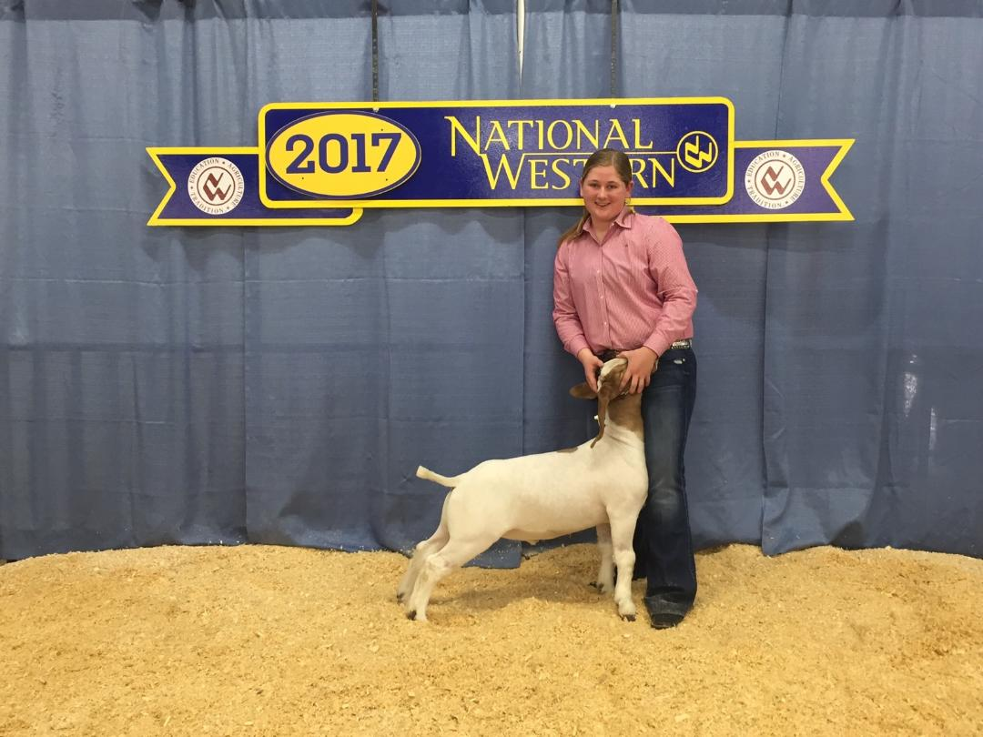 2017 National Western Stock Show - McKenna Richardson (Hoss x Helms J129) 3rd in class