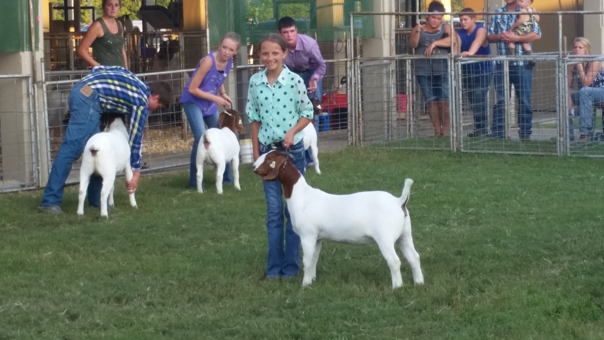 2016 Grand Champion Breeding Doe Montgomery County 4-H Fair (X-Factor x Eagle Hill Doe) shown by Alivia Ewing