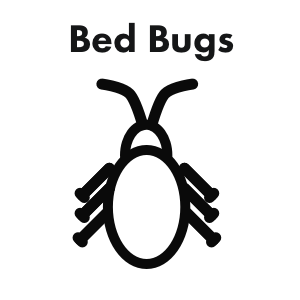 Bed Bugs.png