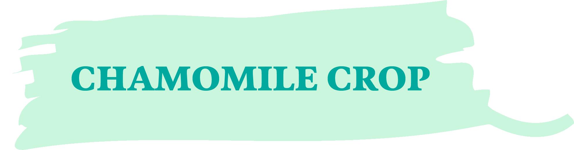 CHAMOMILE CROP