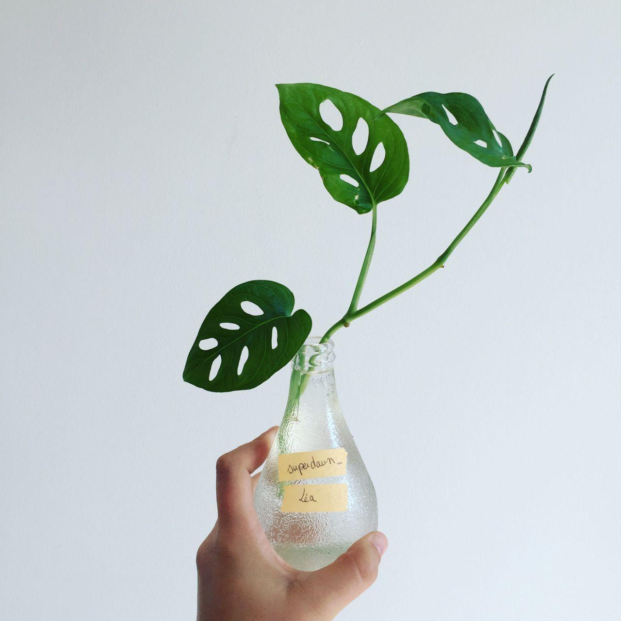 plant swap.jpg