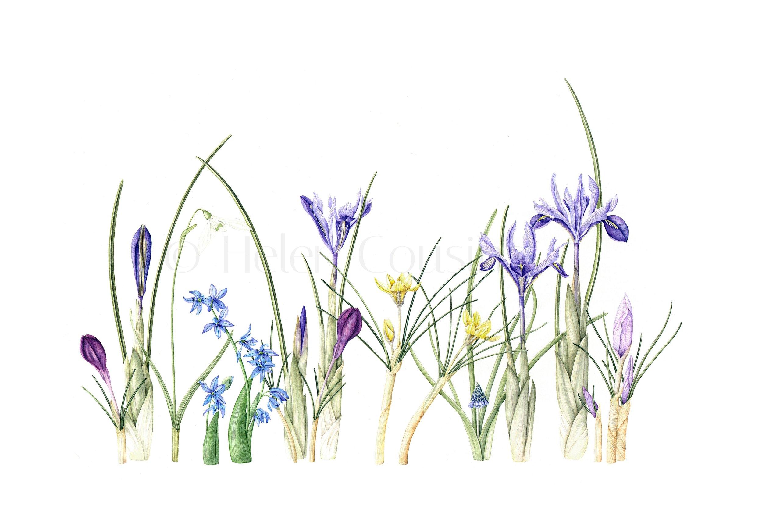 Spring bulbs.jpg