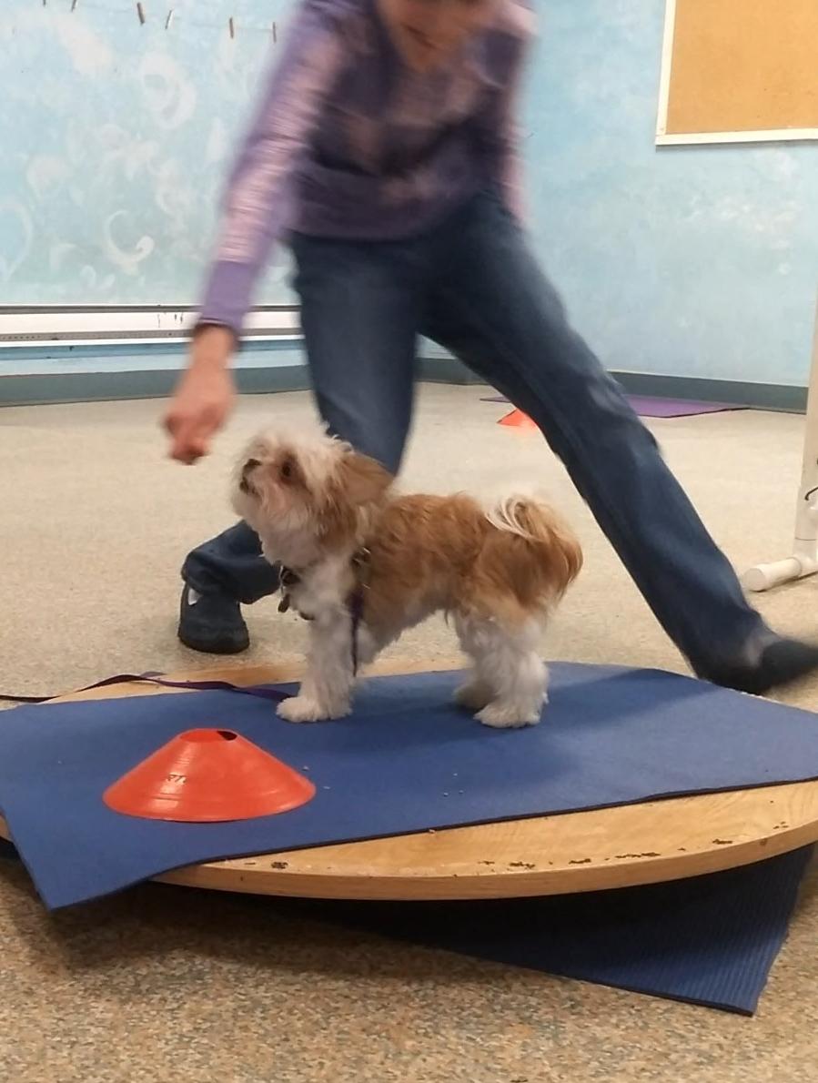 Kona using the wobble board.