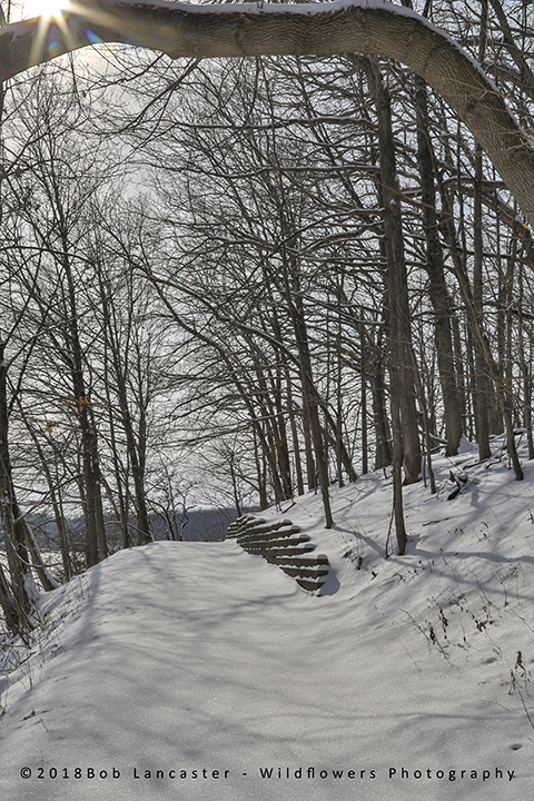 Macbride lake trail after the snow storm-3577.jpg