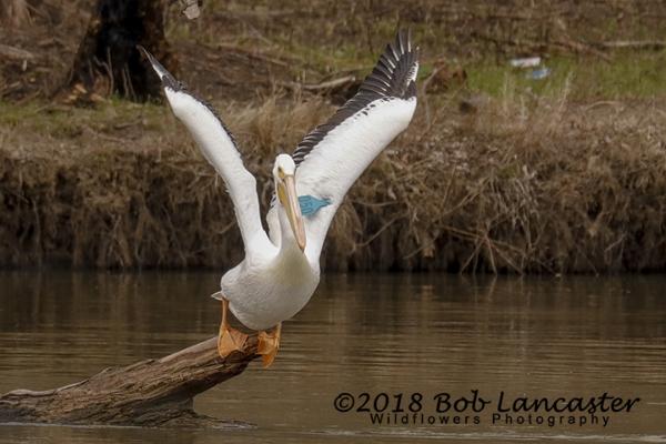 IARiver Pelican#1_MG_2032.jpg
