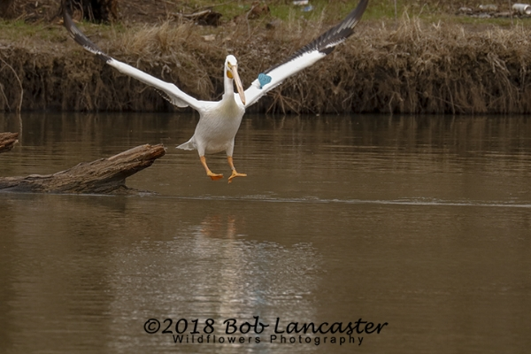 IaRiver Pelican#2_MG_2033.jpg