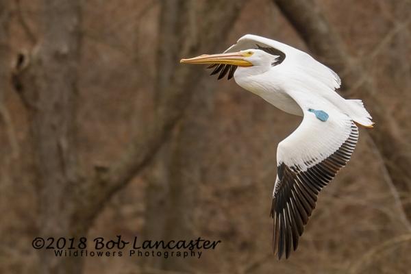 IARiver Pelican#4_MG_2126.jpg