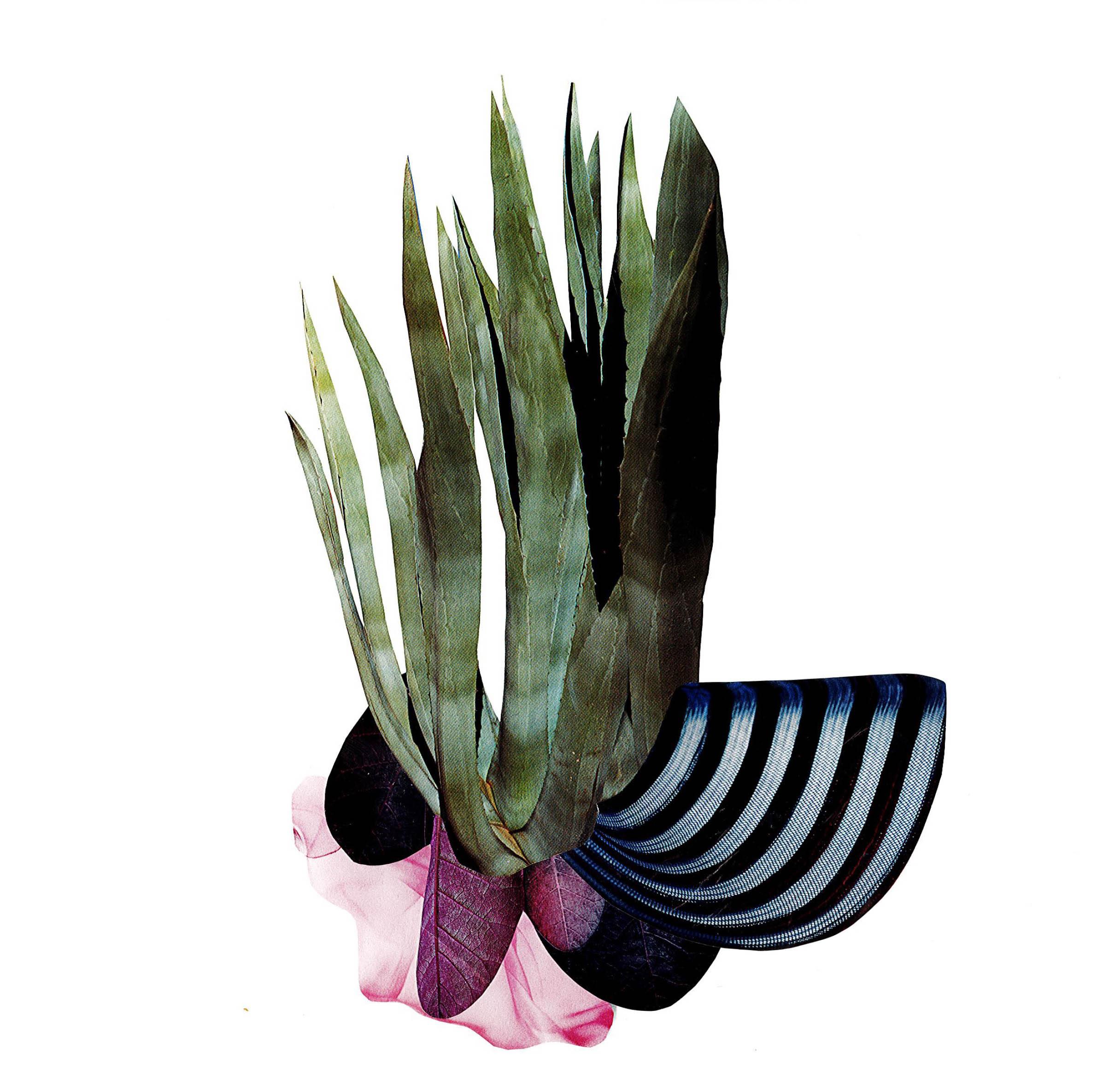 PlantThings.jpg