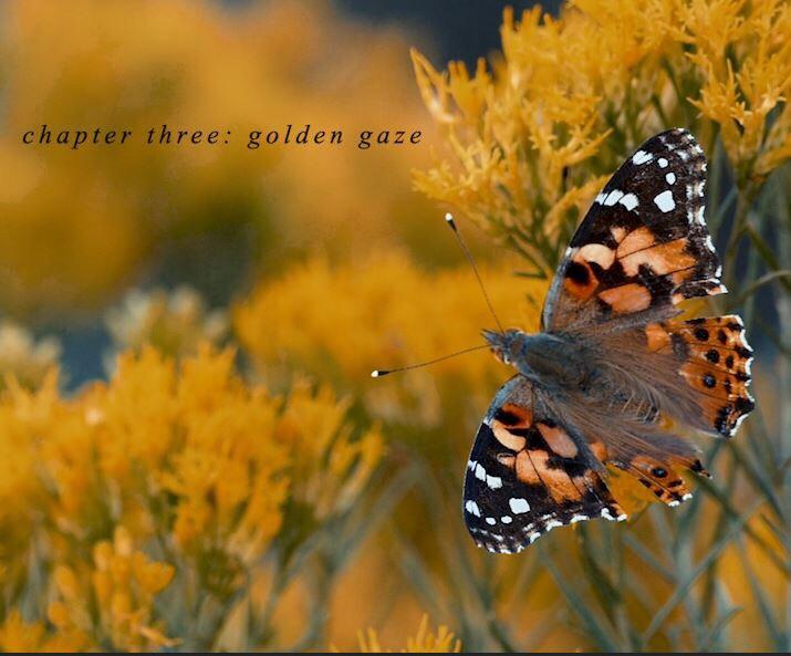 butterflypromo.JPEG