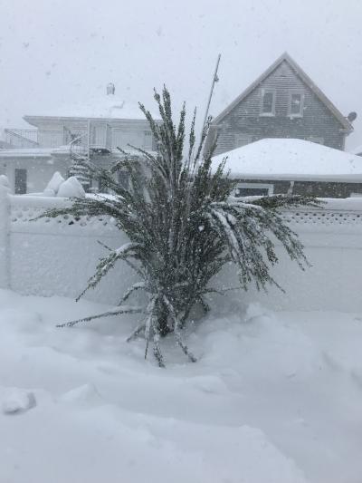 3/13/18 - blizzard day
