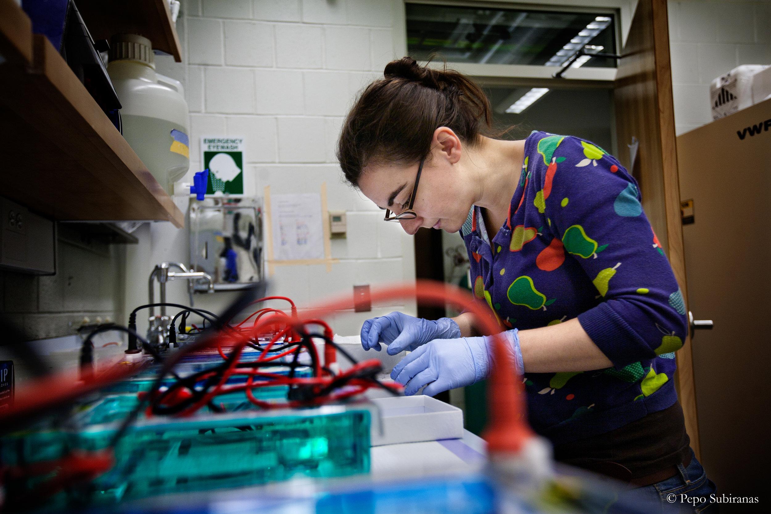 At her lab at Harvard University, Alicia getting some samples for transcriptomic preparation.