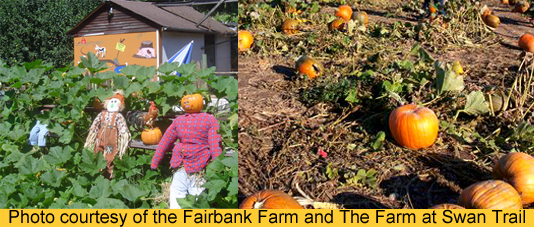 Blog2_02_PumpkinPatch.jpg