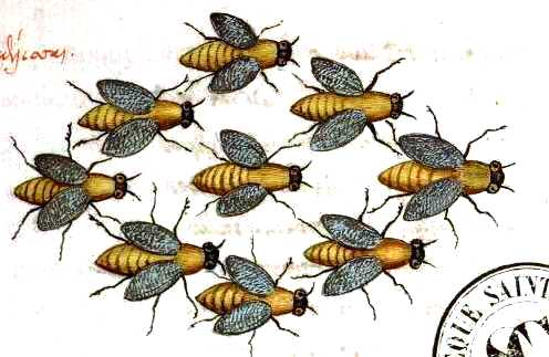 Animal-Insect-Bees-Medieval-Swarm.jpg