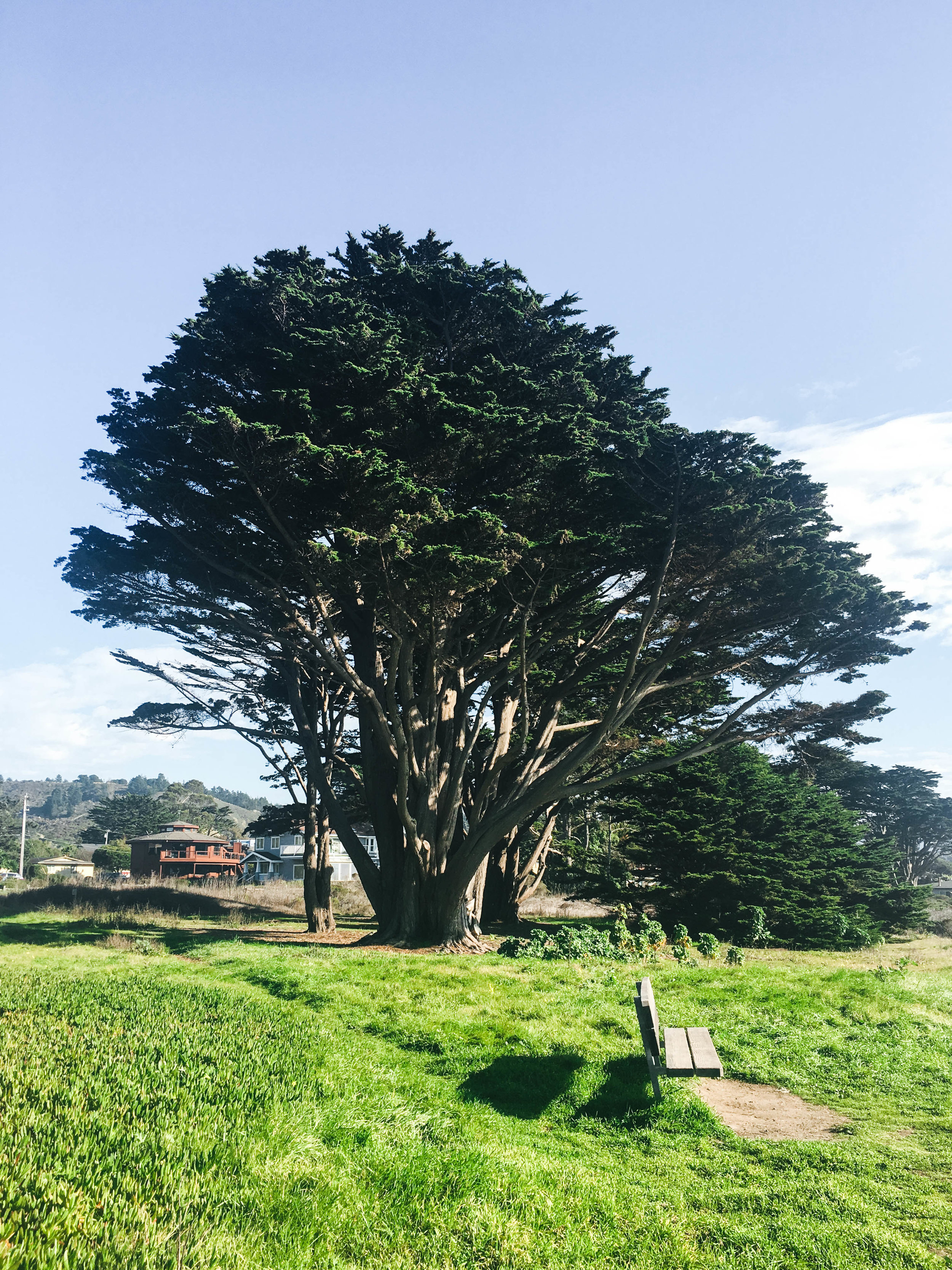 "<p style=""font-family:brandon-grotesque;font-weight:500; font-size:11px; text-center:left; color:light grey;letter-spacing: 1px"">OCTOBER 22, 2017 • PICNIC • � Santa Cruz, CA</p>"