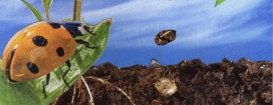 SC25_Ladybug 1st Chakra_Companions.jpg