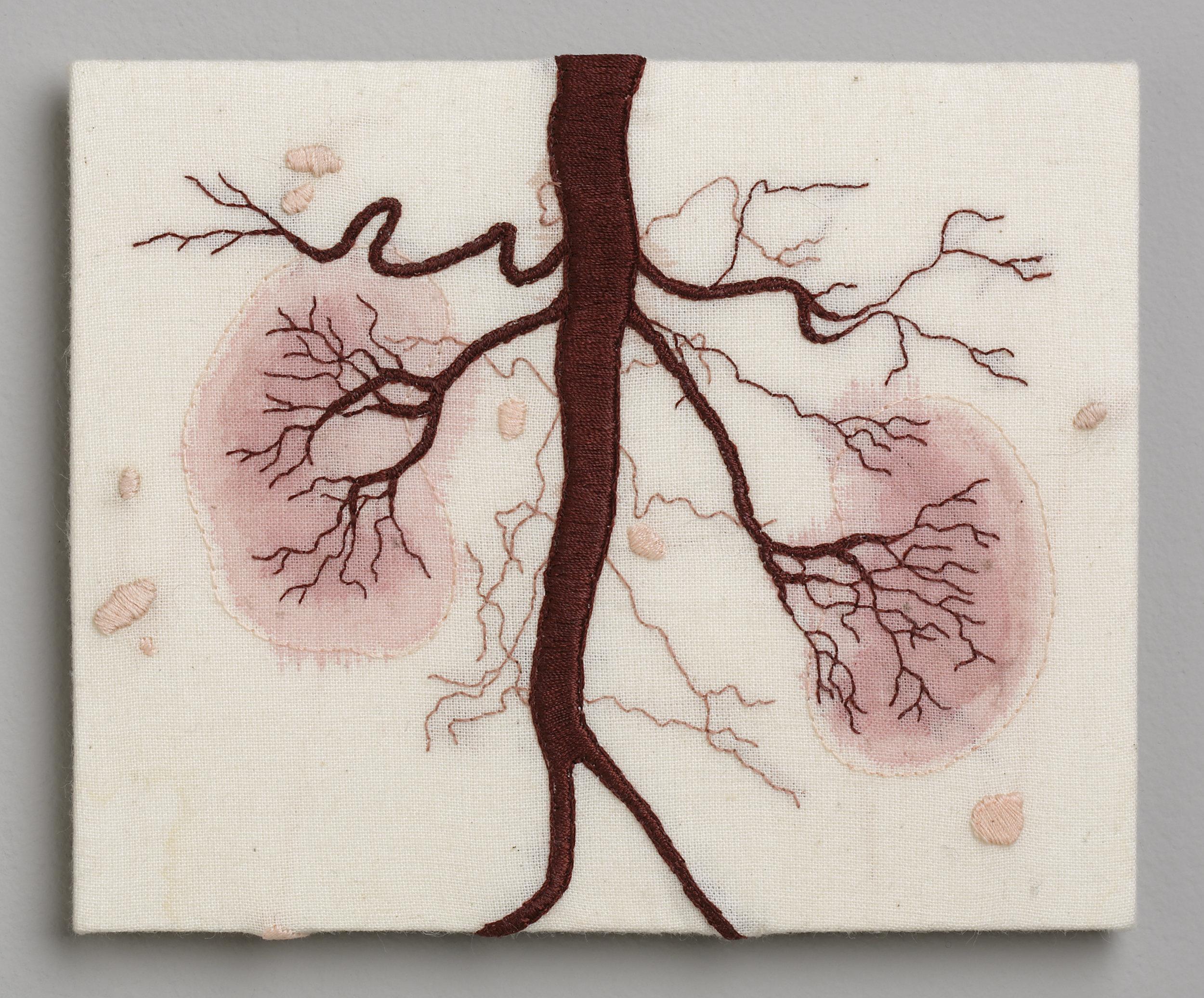 No.7 Kidneys