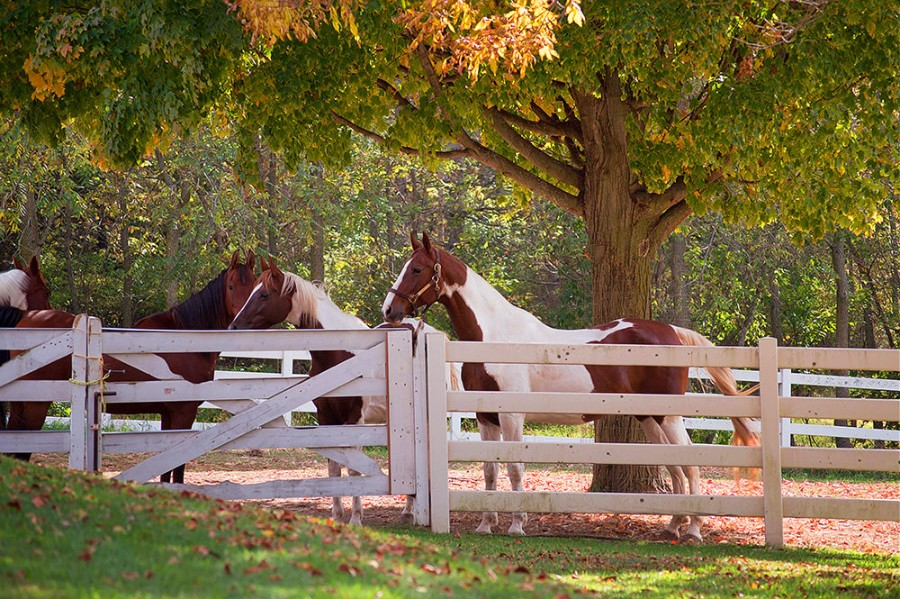 Surprise your Guests – Gentle horses make great photo backdrops and happily accept carrots from visitors.