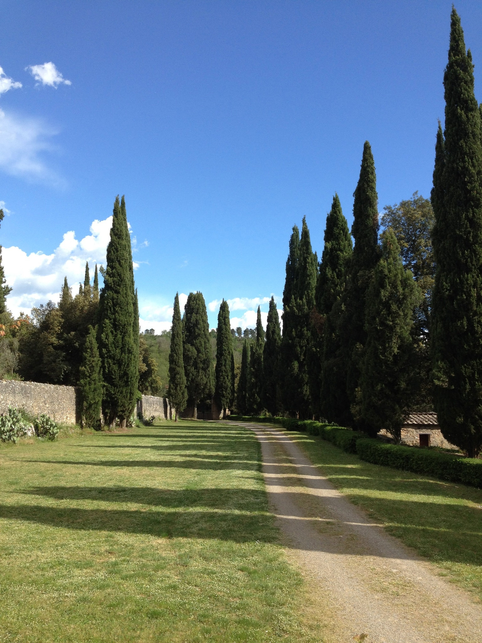 Drive to Spannocchia