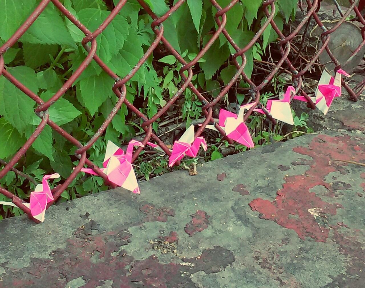 Photo & origami cranes by Karen Kaye Llamas