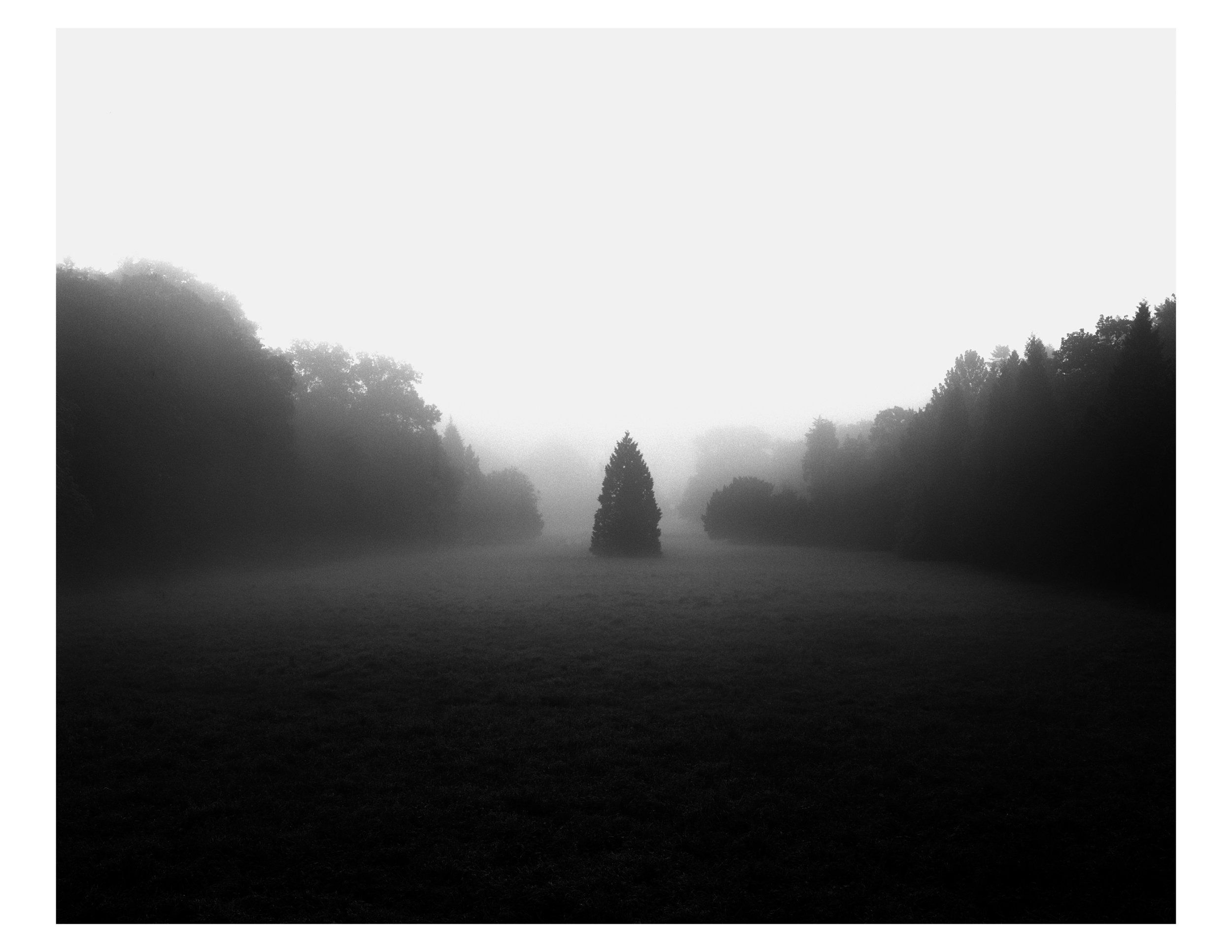 Lone Tree. Lendnice, Czech Republic