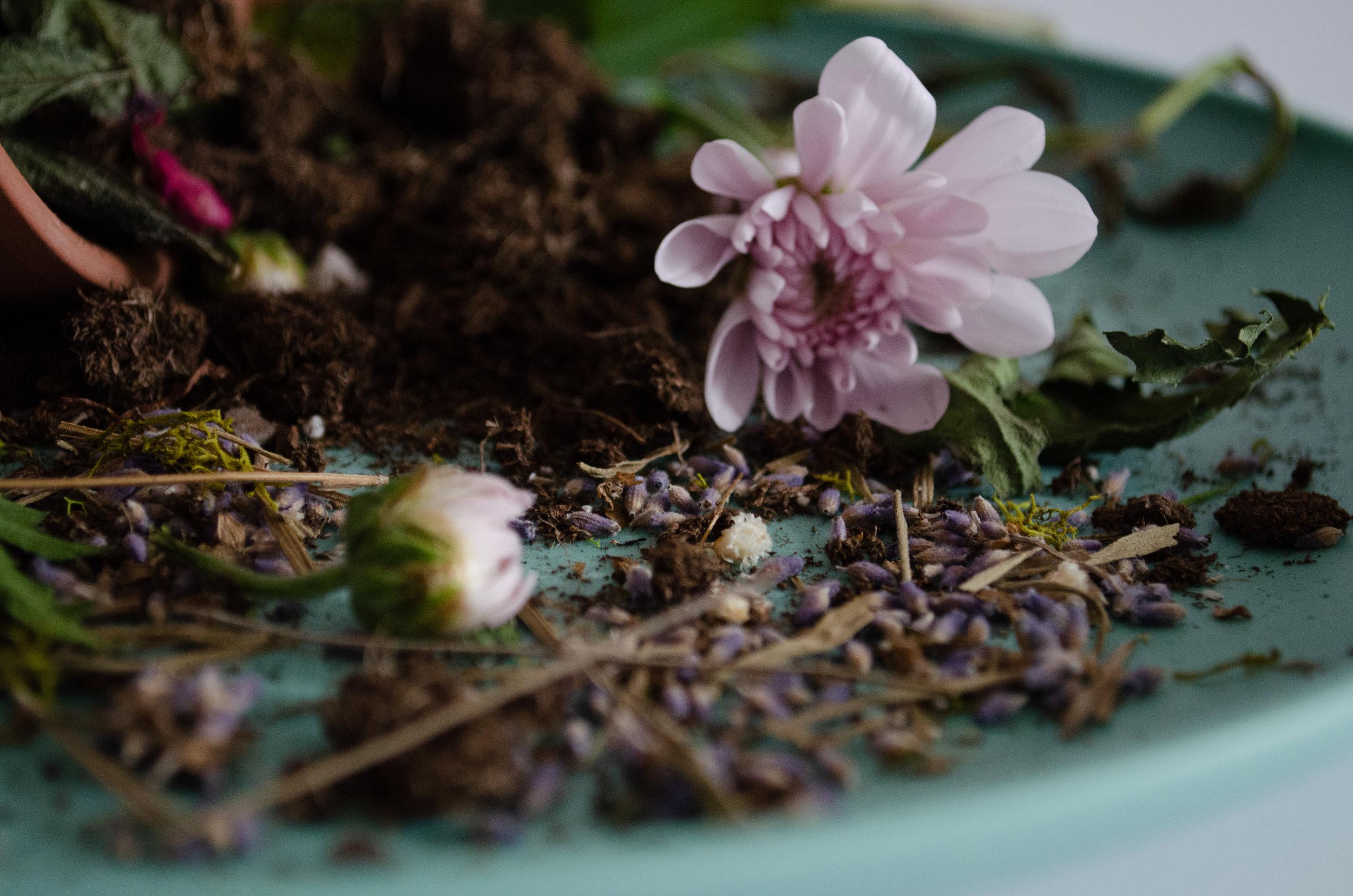 Soil and flowers_.jpg