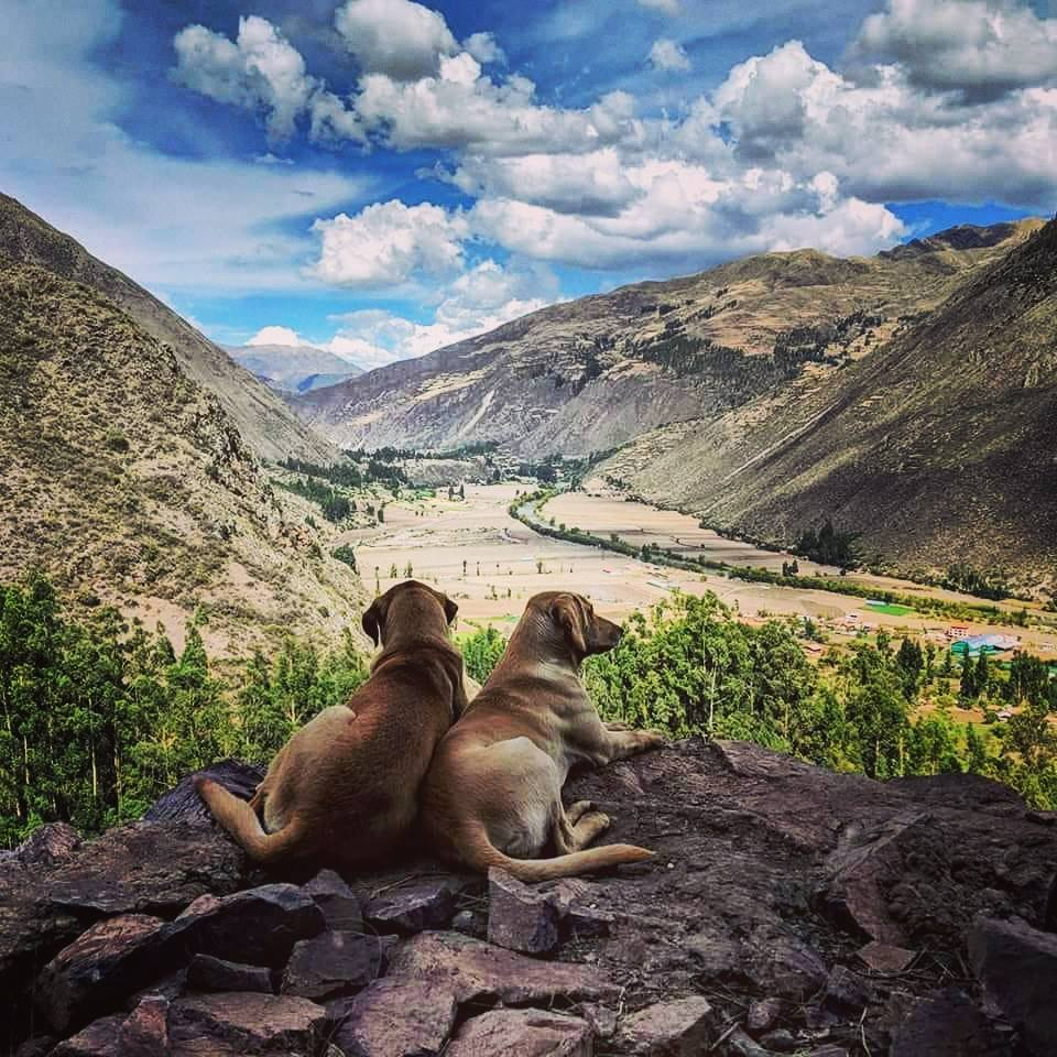 sacred valley dogs.jpg