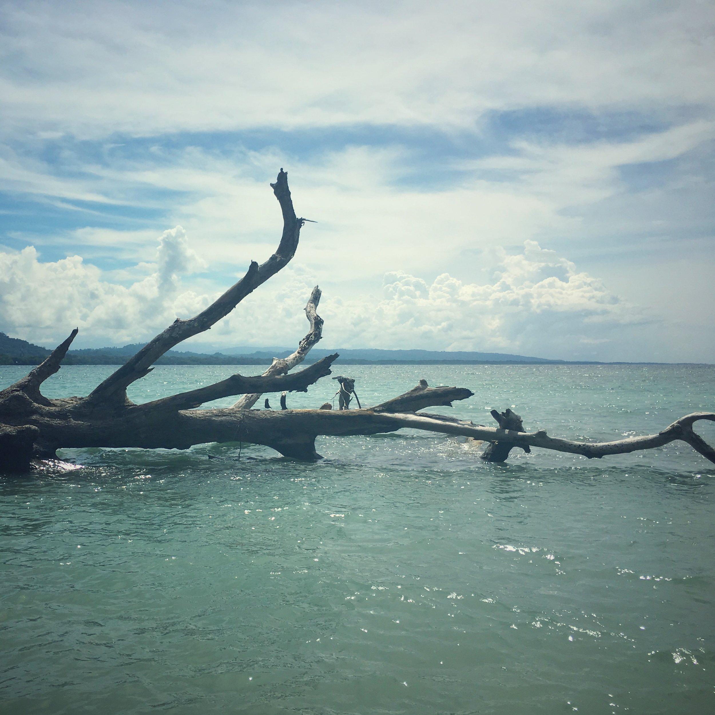 Caribbean : Cahuita