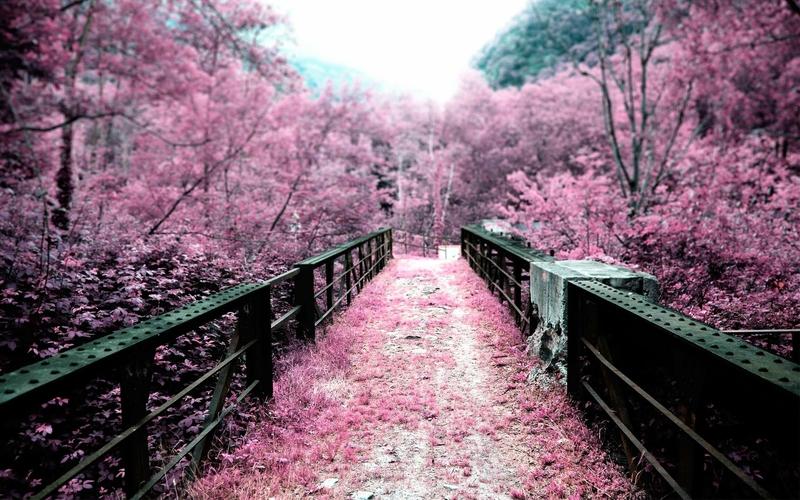 landscapes cherry blossoms flowers bridges pink flowers 2800x1750 wallpaper_www.wall321.com_40.jpg