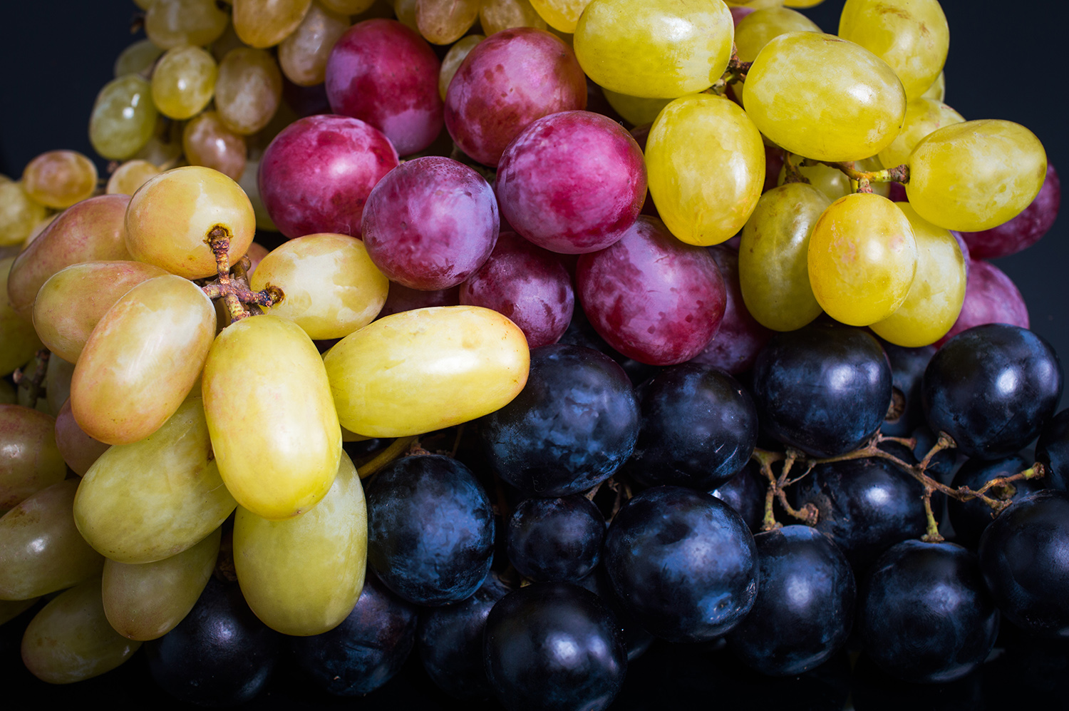Grapes of all kinds have been found to be toxic to dogs