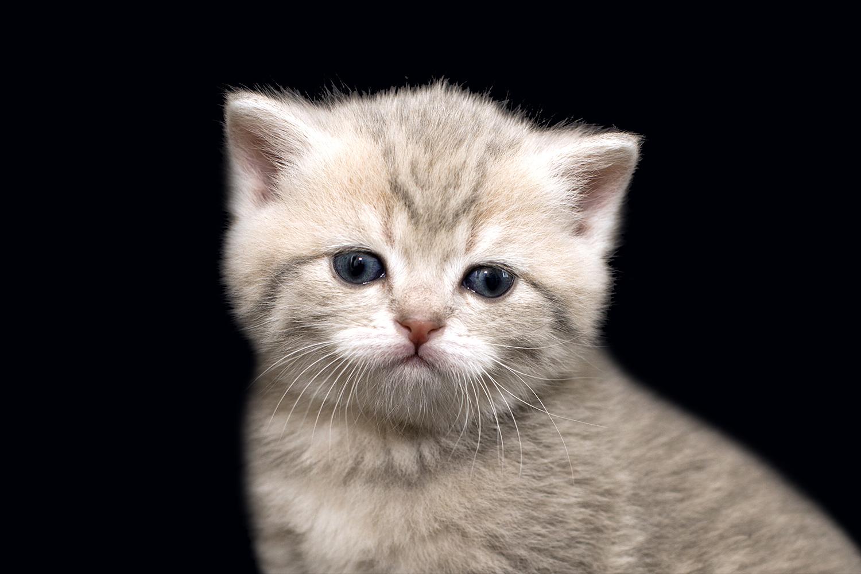 little kitten.png
