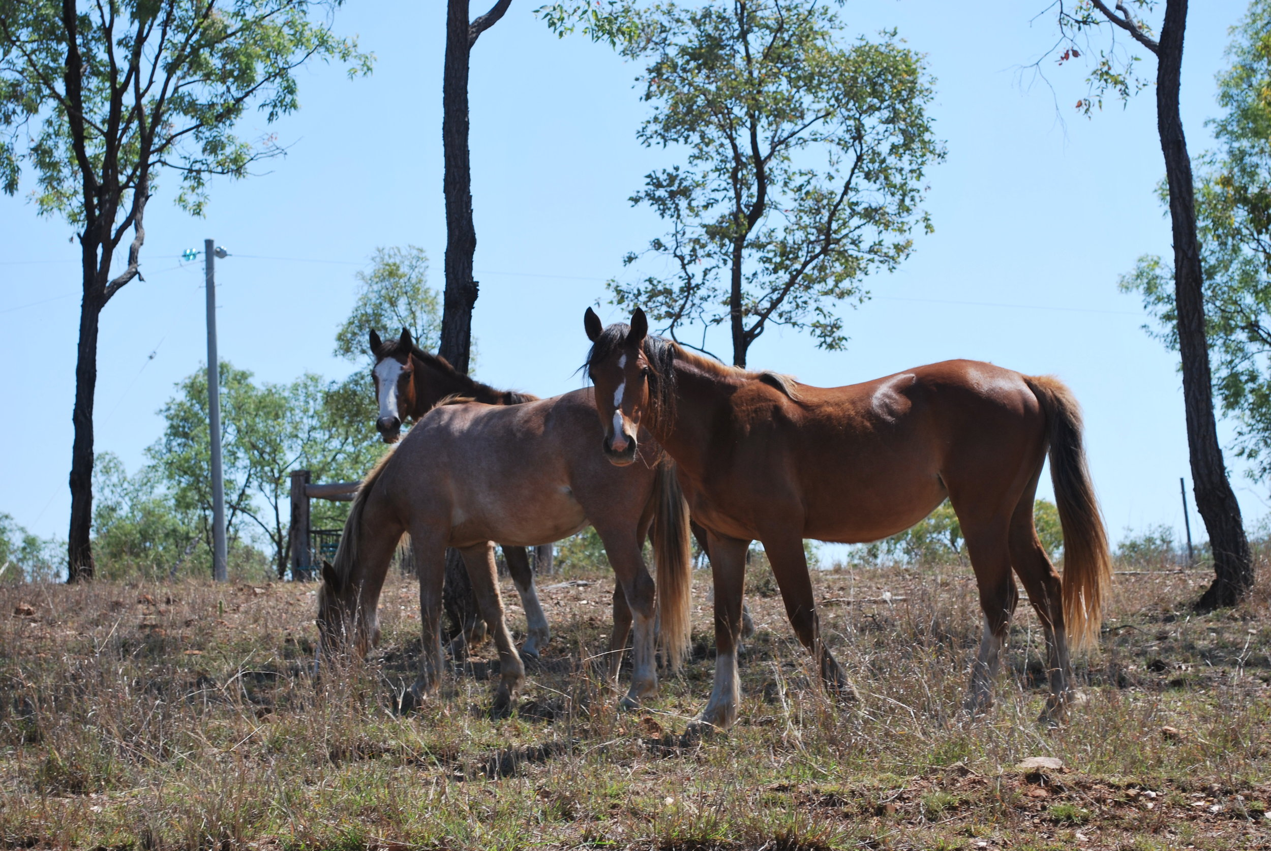 Horse Photos - Kroombit to Blackdown - Discover Oz 4x4 Adventures