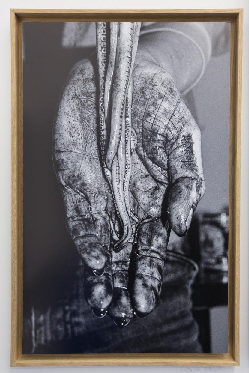 Guillaume Delleuse,  Octopus , 2016. Tirage jet d'encre, 53 cm x 80 cm