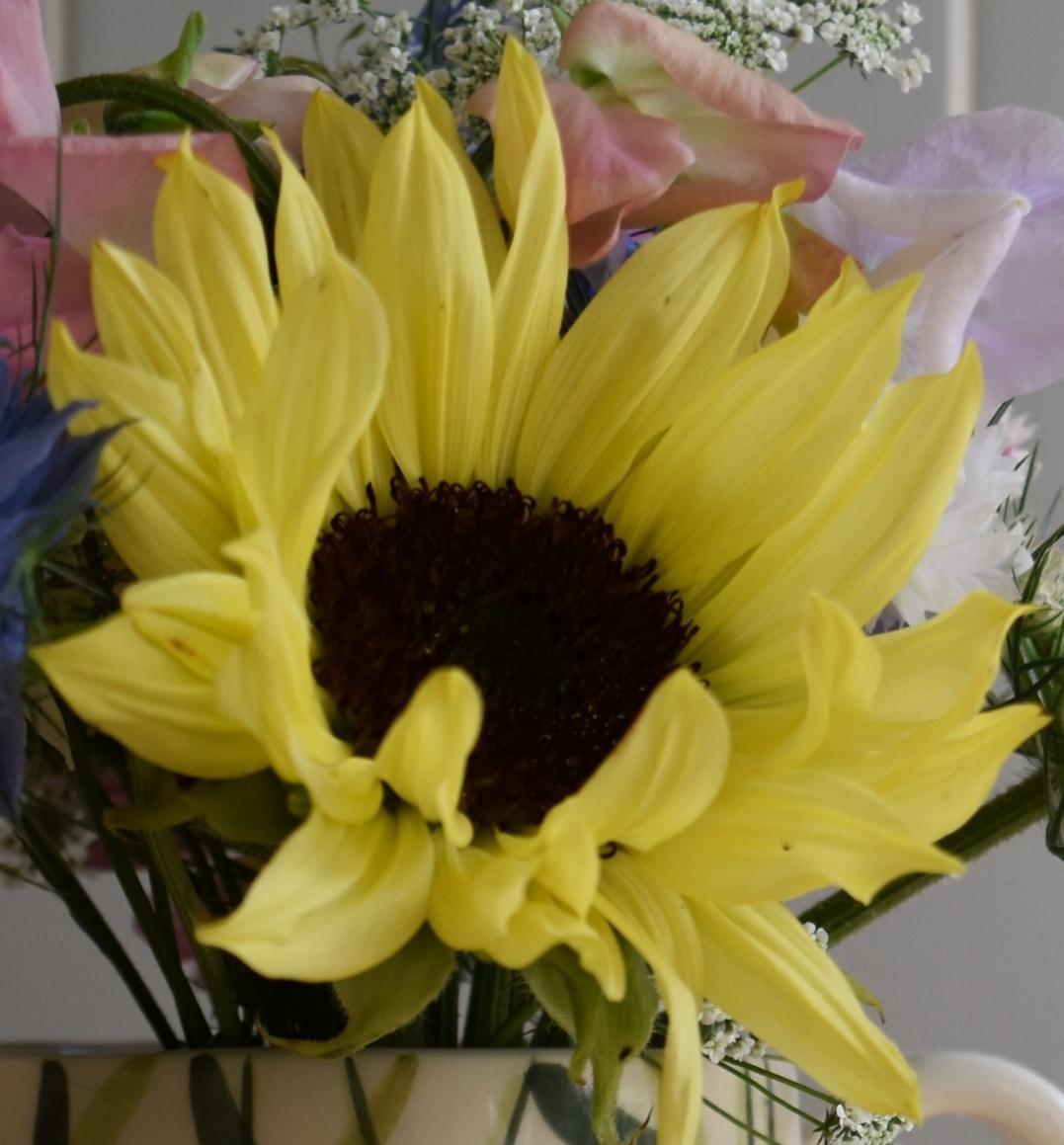 Sunflower (valentine)